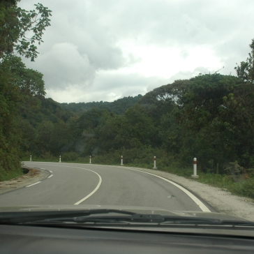 The Highway leading in to the Forest